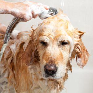 Veterinary cosmetics